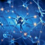 A THC hatással van a mielinizációra