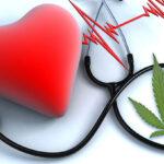 A kannabiszhasználat nincs összefüggésben a szív-érrendszeri betegségek kockázatának növekedésével