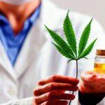 Az Egészségügyi Minisztérium jóváhagyta az orvosi kannabisz kutatását Argentínában