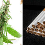 Az orvosi kannabisz bevezetése után csökkent a dohány önjelentett használata