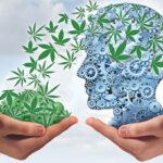 Az orvosi kannabiszt használó betegek kognitív teljesítménye tartós javulást mutat